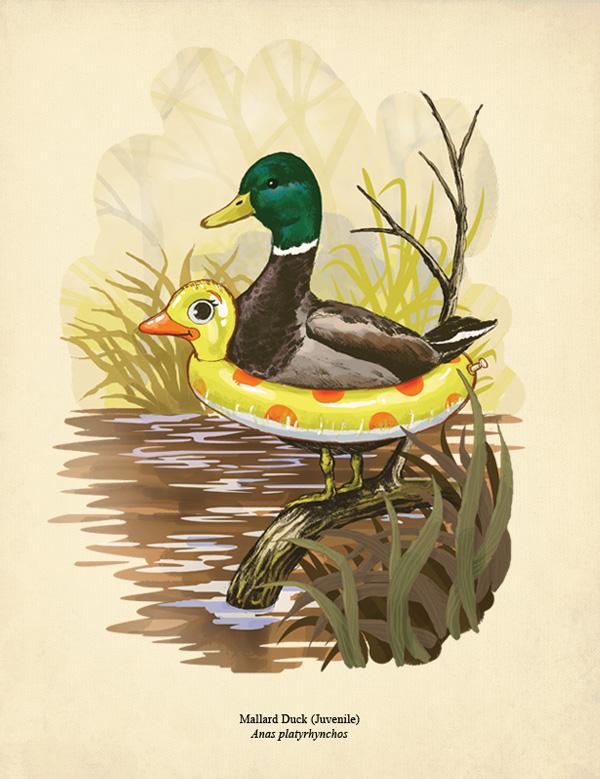 Duck in training